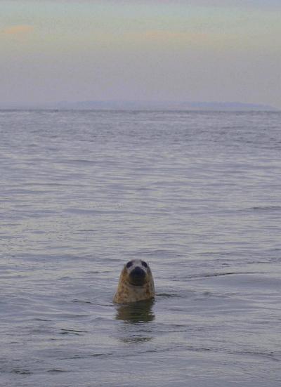 W pogoni za fokami, czyli road trip po wschodnim wybrzeżu Anglii