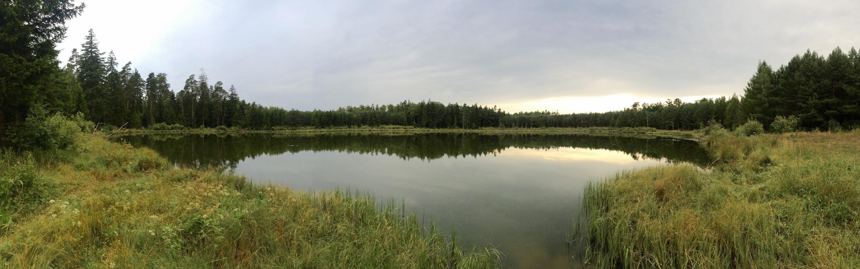 Solno jezioro w lesie